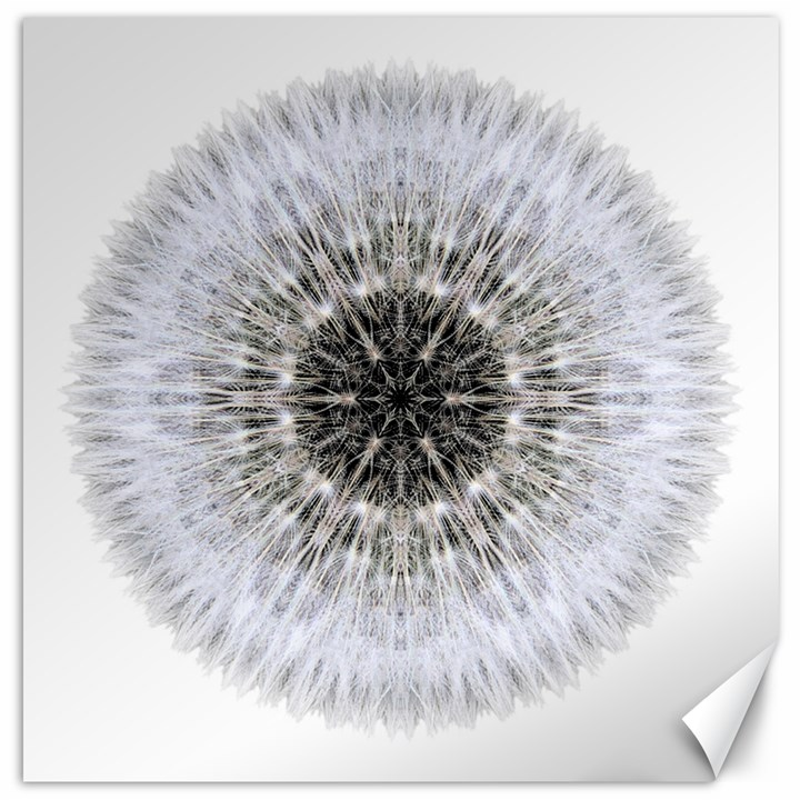 Dandelion Head Flower Mandala Canvas 16  x 16