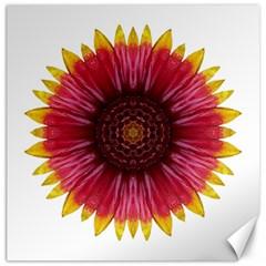 Galliardia Arizona Sun I Flower Mandala Canvas 16  X 16