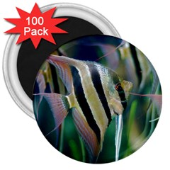 Angelfish 1 3  Magnets (100 Pack)