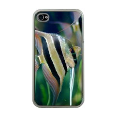 Angelfish 1 Apple Iphone 4 Case (clear)