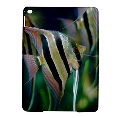 Angelfish 1 Ipad Air 2 Hardshell Cases