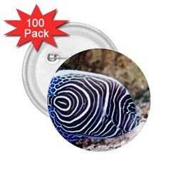 Angelfish 3 2 25  Buttons (100 Pack)