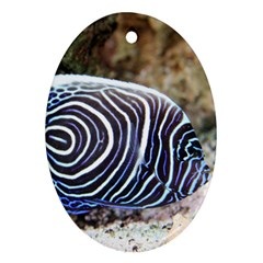 Angelfish 3 Oval Ornament (two Sides)