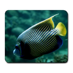 Angelfish 4 Large Mousepads