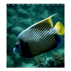 Angelfish 4 Shower Curtain 66  X 72  (large)