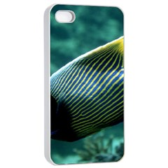 Angelfish 4 Apple Iphone 4/4s Seamless Case (white)