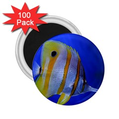 Butterfly Fish 1 2 25  Magnets (100 Pack)