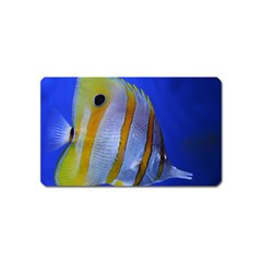 Butterfly Fish 1 Magnet (name Card)