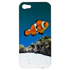 Clownfish 1 Apple Iphone 5 Hardshell Case