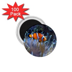 Clownfish 2 1 75  Magnets (100 Pack)