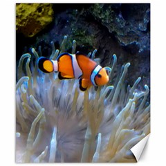 Clownfish 2 Canvas 8  X 10