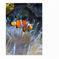 Clownfish 2 Large Garden Flag (two Sides)