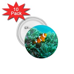 Clownfish 3 1 75  Buttons (10 Pack)