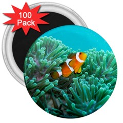 Clownfish 3 3  Magnets (100 Pack)