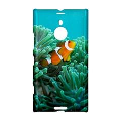 Clownfish 3 Nokia Lumia 1520