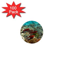 Coral Garden 1 1  Mini Magnets (100 Pack)