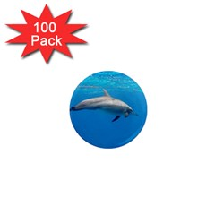 Dolphin 3 1  Mini Magnets (100 Pack)