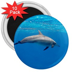 Dolphin 3 3  Magnets (10 Pack)