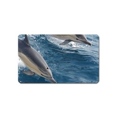 Dolphin 4 Magnet (name Card)