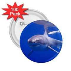 Great White Shark 4 2 25  Buttons (100 Pack)