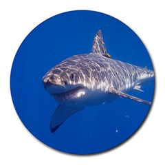 Great White Shark 5 Round Mousepads