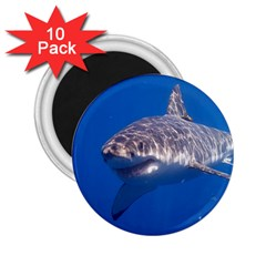 Great White Shark 5 2 25  Magnets (10 Pack)