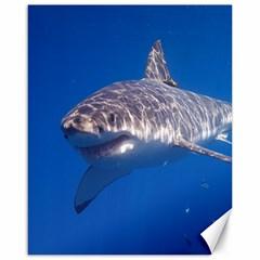 Great White Shark 5 Canvas 16  X 20