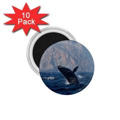 Humpback 1 1 75  Magnets (10 Pack)