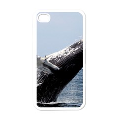 Humpback 2 Apple Iphone 4 Case (white)