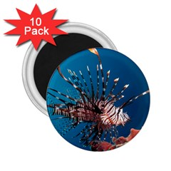 Lionfish 1 2 25  Magnets (10 Pack)