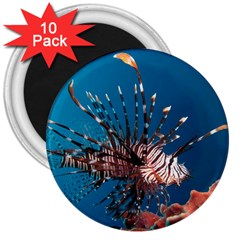 Lionfish 1 3  Magnets (10 Pack)