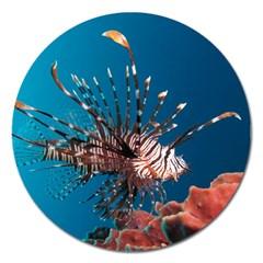 Lionfish 1 Magnet 5  (round)
