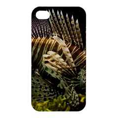 Lionfish 3 Apple Iphone 4/4s Hardshell Case