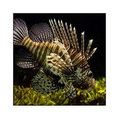 Lionfish 3 Acrylic Tangram Puzzle (6  X 6 )