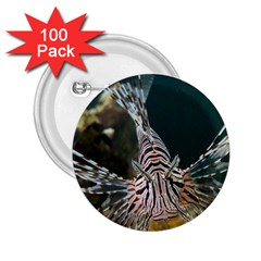 Lionfish 4 2 25  Buttons (100 Pack)