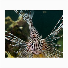 Lionfish 4 Small Glasses Cloth (2 Side)