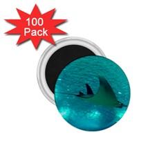 Manta Ray 1 1 75  Magnets (100 Pack)