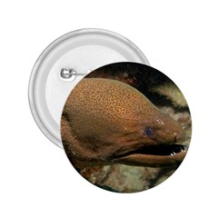 Moray Eel 1 2 25  Buttons