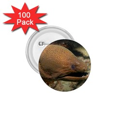 Moray Eel 1 1 75  Buttons (100 Pack)