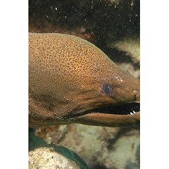 Moray Eel 1 5 5  X 8 5  Notebooks