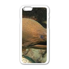 Moray Eel 1 Apple Iphone 6/6s White Enamel Case
