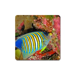 Regal Angelfish Square Magnet
