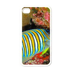 Regal Angelfish Apple Iphone 4 Case (white)