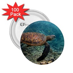 Sea Turtle 3 2 25  Buttons (100 Pack)