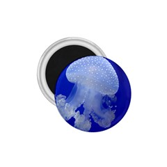 Spotted Jellyfish 1 75  Magnets