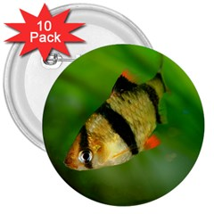 Tiger Barb 3  Buttons (10 Pack)