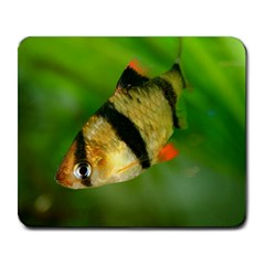Tiger Barb Large Mousepads