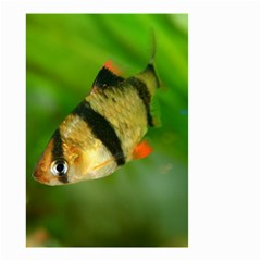 Tiger Barb Small Garden Flag (two Sides)