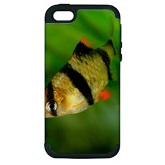Tiger Barb Apple Iphone 5 Hardshell Case (pc+silicone)