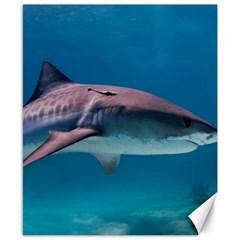 Tiger Shark 1 Canvas 8  X 10